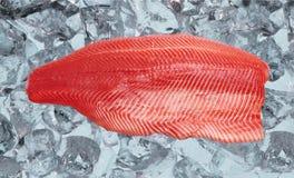 Salmon on ice close up royalty free stock photos