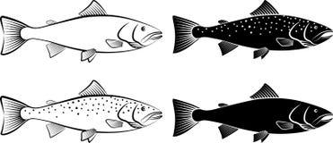 Salmon. Isolated salmon - clip art illustration Stock Images