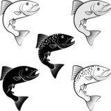 Salmon. Isolated salmon - clip art illustration Stock Photography