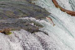 Salmon Jumping Over simple les ruisseaux tombe au parc national de Katmai, Alaska photographie stock