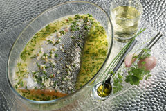 Salmon marinated with white wine and herbs Royalty Free Stock Photos