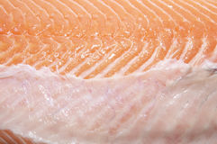 Salmon meat macrophotography Royalty Free Stock Images