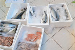 Salmon and other fish in plastic box on a floor in fish market antalya turkey Stock Photos