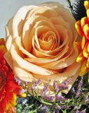 A salmon pink rose in a flower arrangement Royalty Free Stock Photography