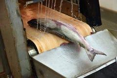Salmon production line Royalty Free Stock Photos
