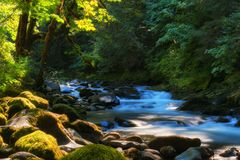Salmon River Mt Hood National Forest Lizenzfreies Stockfoto