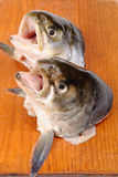 Salmon's heads. On  cutting board Royalty Free Stock Photos