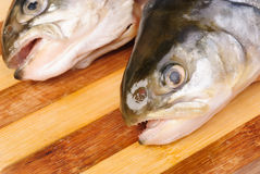 Salmon's heads on  cutting board. Isolated ower white background Royalty Free Stock Photos