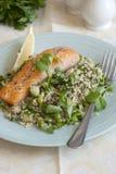 Salmon with salad Stock Photos