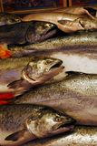 Salmon for sale Royalty Free Stock Photography