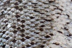 Salmon scales texture Royalty Free Stock Photos