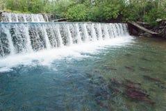 Salmon Spawning Lizenzfreies Stockbild