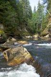 Salmon spawning creek in northwest British Columbia royalty free stock images