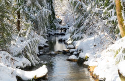 Salmon spawning creek after a snow storm. Stock Image