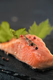 Salmon steak. Grilled salmon steak close-up shot stock images