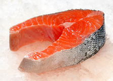 Salmon steak on ice Stock Photography