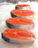 Salmon steak on ice Stock Photos