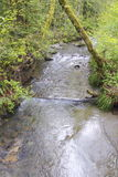 Salmon Stream Royalty Free Stock Images