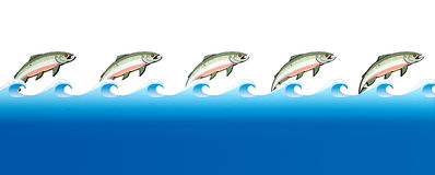 Salmon Swimming Upstream. A stylization of the great salmon migrations with cutouts of pink salmon in a row with a row of blue water on an  background Royalty Free Stock Photos