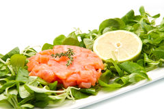 Salmon tartare Stock Photography
