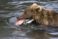 Salmon-To-Go Stock Image