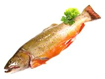 Salmon Trout - Fish. On white Background stock photography