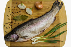 Salmon trout Royalty Free Stock Images