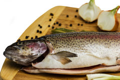 Salmon trout Royalty Free Stock Photos