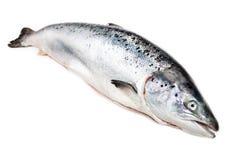 salmon  on white background Stock Photo
