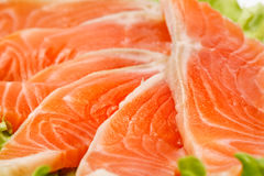 Salmon zoom Stock Photography