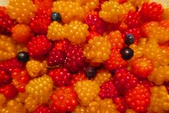 Salmonberries and Blueberries royalty free stock image