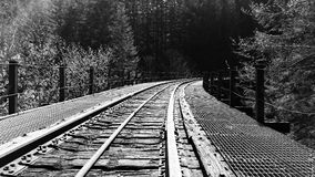 Salmonberry Trail Royalty Free Stock Photography