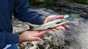 Salmone senza sbocco sul mare Fotografia Stock Libera da Diritti