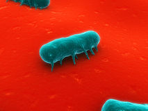 Salmonella. 3d rendered close up of salmonella bacteria Stock Images
