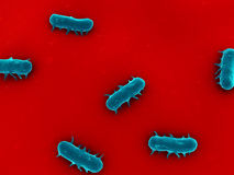 Salmonella. 3d rendered close up of salmonella bacteria Royalty Free Stock Photography