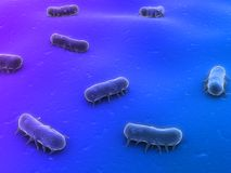 Salmonella. 3d rendered illustration of isolated salmonella bacteria Stock Image