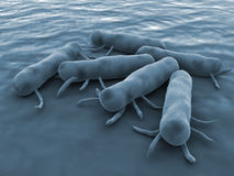 Salmonella Bacteria. Cause of food poisoning Royalty Free Stock Image