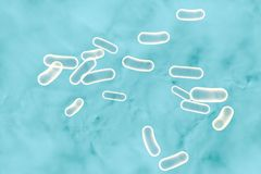 Salmonella bacteria which cause salmonellosis. Salmonella bacteria which cause food infection salmonellosis, 3D illustration Royalty Free Stock Photo