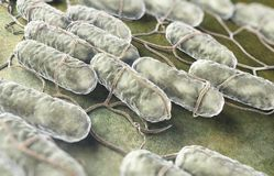 Salmonella bakterie Obraz Royalty Free