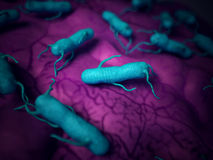 The salmonella - close up. Medical bacteria illustration of the salmonella Stock Images