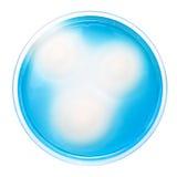 Salmonella kolonie na MSRV agaru talerzu Obrazy Royalty Free