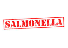 SALMONELLA. Red Rubber Stamp over a white background Royalty Free Stock Images