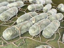 Salmonellenbakterien stockbild