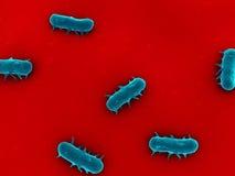 Salmonelles Photographie stock libre de droits