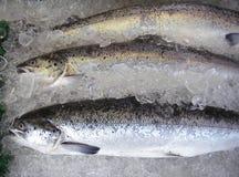 Salmones criados granja Fotos de archivo