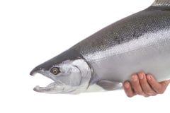 Salmones de Coho de plata brillantes aislados en blanco Foto de archivo
