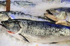 Salmones de rey congelados Imagen de archivo libre de regalías