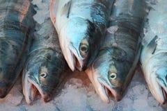 Salmones de Sockeye frescos del mercado Imagen de archivo libre de regalías