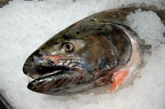Salmones en el hielo Imagen de archivo libre de regalías