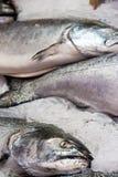 Salmones en el hielo en el mercado de pescados Imagen de archivo